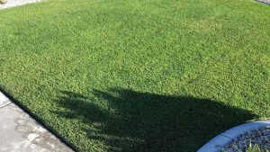 Example Of A Beautifully Maintained Lawn.